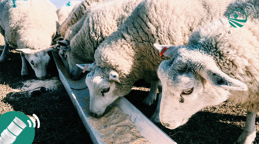 alimentation animale silo capteur connecté